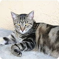 Adopt A Pet :: Tracy - Bonita Springs, FL