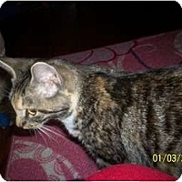 Adopt A Pet :: Sissy - Plattsburgh, NY