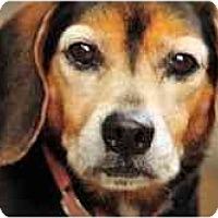 Adopt A Pet :: Happy - Novi, MI