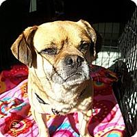 Adopt A Pet :: Roscoe - Anaheim, CA