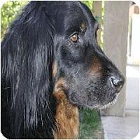 Adopt A Pet :: McGraw - Phoenix, AZ