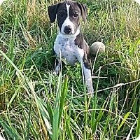 Adopt A Pet :: Fergie - Russellville, KY