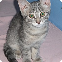 Adopt A Pet :: Nonnie - Colmar, PA