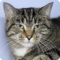 Adopt A Pet :: Tissy - Chicago, IL