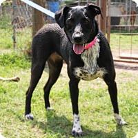 Adopt A Pet :: Duchess - Natchitoches, LA
