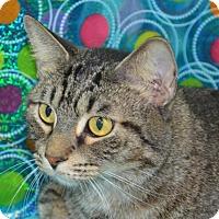 Adopt A Pet :: Noah - Englewood, FL