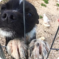 Adopt A Pet :: zander - York, SC