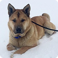 Adopt A Pet :: Copper - Saskatoon, SK