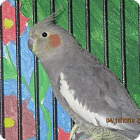 Adopt A Pet :: Malika - East Hartland, CT