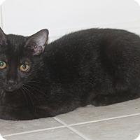 Adopt A Pet :: Pippi - Houston, TX