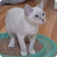 Adopt A Pet :: Charm - Davis, CA