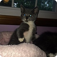 Adopt A Pet :: Delilah - Jackson, NJ