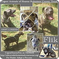 American Pit Bull Terrier/Mastiff Mix Dog for adoption in Hearne, Texas - Fred aka Flik