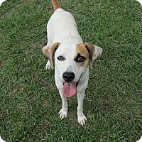Adopt A Pet :: Eva - Smithtown, NY