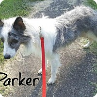 Adopt A Pet :: Parker - Joliet, IL