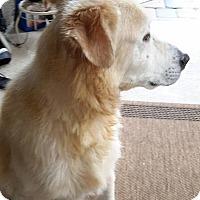 Adopt A Pet :: Nicky - Cape Coral, FL