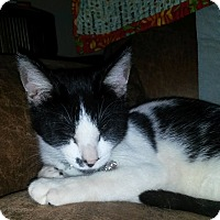 Adopt A Pet :: Smudge - Knoxville, TN