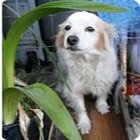 Adopt A Pet :: Drogan - Von Ormy, TX