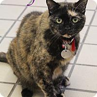 Adopt A Pet :: Ally - Bradenton, FL