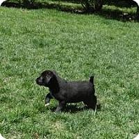 Adopt A Pet :: baby Jenny - Marlton, NJ
