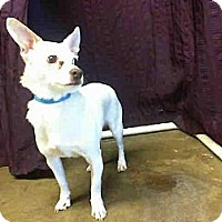 Adopt A Pet :: Colton URGENT - San Diego, CA