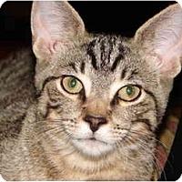Adopt A Pet :: Claude - Cuyahoga Falls, OH