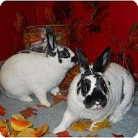 Adopt A Pet :: Faith & Oreo - Roseville, CA