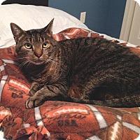 Adopt A Pet :: Smokey - Colmar, PA