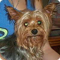 Adopt A Pet :: Kaitlyn - Lorain, OH