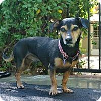 Adopt A Pet :: zzz - Boots - Rancho Santa Margarita, CA