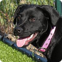 Adopt A Pet :: Cloe - Meridian, ID