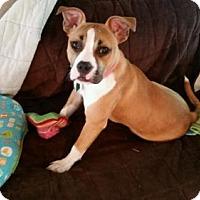 Adopt A Pet :: Rika - Buffalo, NY