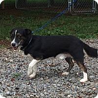 Adopt A Pet :: Vinny - Shelter Island, NY