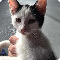 Adopt A Pet :: Trixie - Norwich, NY