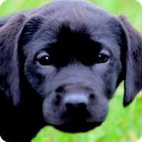 Adopt A Pet :: ROLO(A SAD SAD STORY!!! - Wakefield, RI