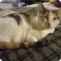 Adopt A Pet :: Star - Bridgeton, MO
