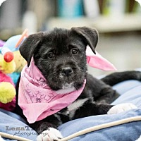 Adopt A Pet :: Sadie - Frisco, TX