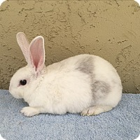Adopt A Pet :: Brother & sister - Bonita, CA