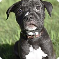 Adopt A Pet :: Luigi - Huntsville, AL