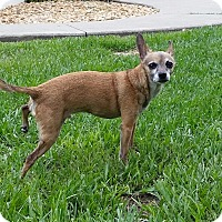 Adopt A Pet :: Rico - Weeki Wachee, FL