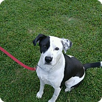 Adopt A Pet :: Roscoe - Goldsboro, NC
