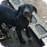 Adopt A Pet :: Monet - Wilminton, DE