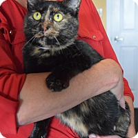 Adopt A Pet :: Miss Kitty - Surrey, BC