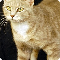 Adopt A Pet :: Monique - Newland, NC
