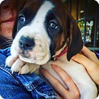 Adopt A Pet :: Nia - Memphis, TN