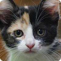 Adopt A Pet :: Opal (40281) - Little Rock, AR