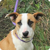 Adopt A Pet :: **BALOU** MEET NOV 19th! - Mukwonago, WI