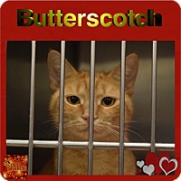 Adopt A Pet :: Butterscotch - Washington, PA