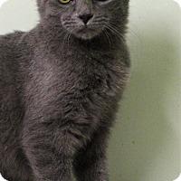 Adopt A Pet :: Fuji - Murphysboro, IL