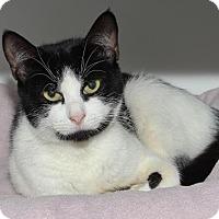 Adopt A Pet :: Tiana - Venice, FL